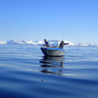 Sportquest fishing at Mefjord Brygge